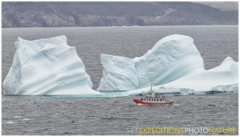 Iceberg, Cape Spear, NL (Photo: Jean-Luc Monfrais)