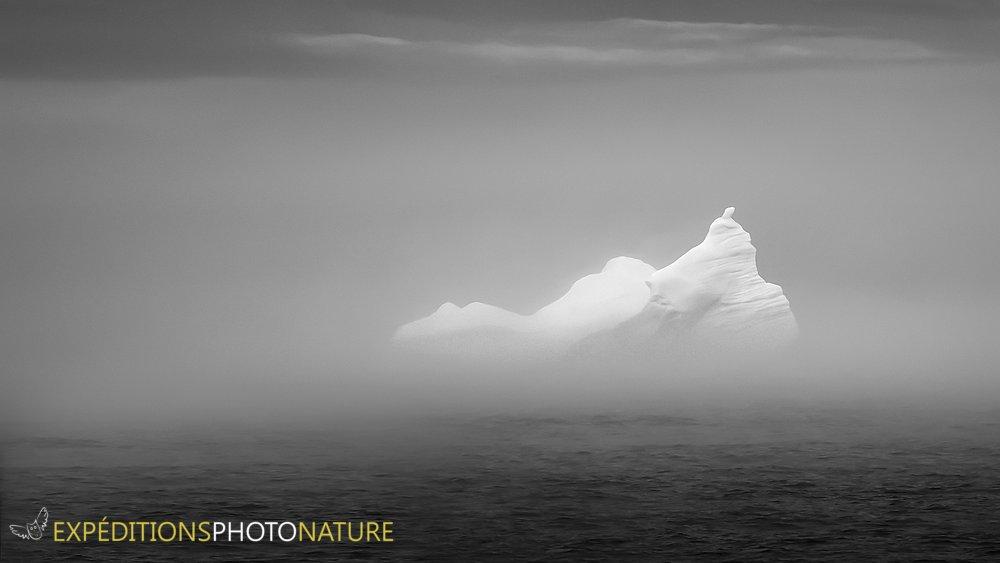 Iceberg dans la brume de Bonavista, crédit photo: Pierre Giard