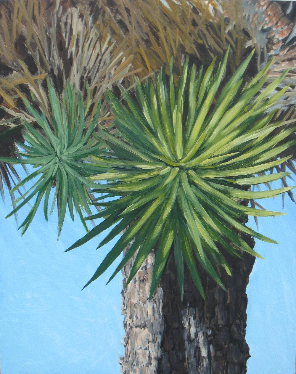 Joshua Tree 4, 2008
