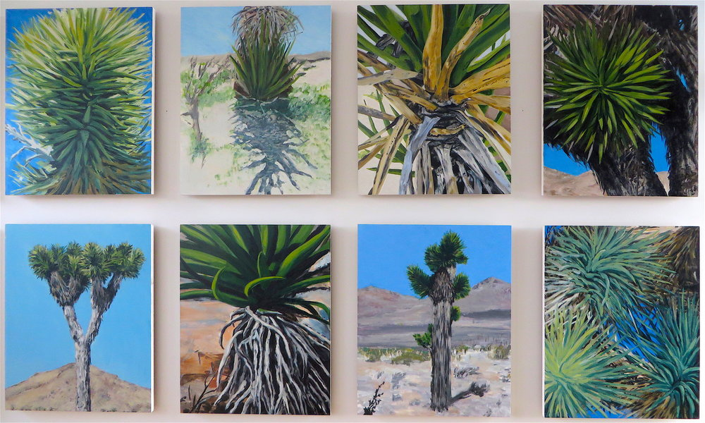 Joshua Tree, Group of Eight, 2008