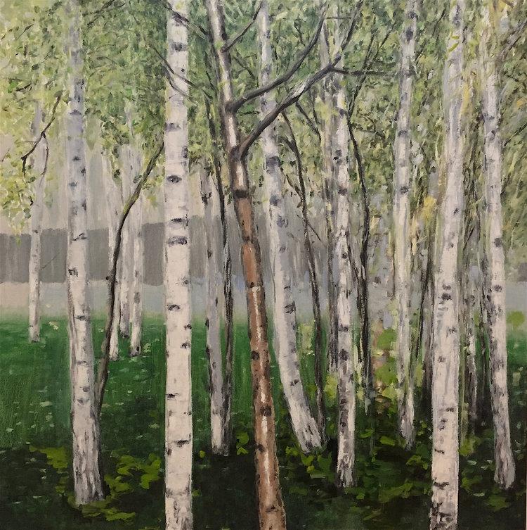 Birch Trees, 2008