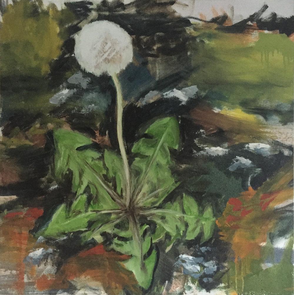 Dandelion, 2009