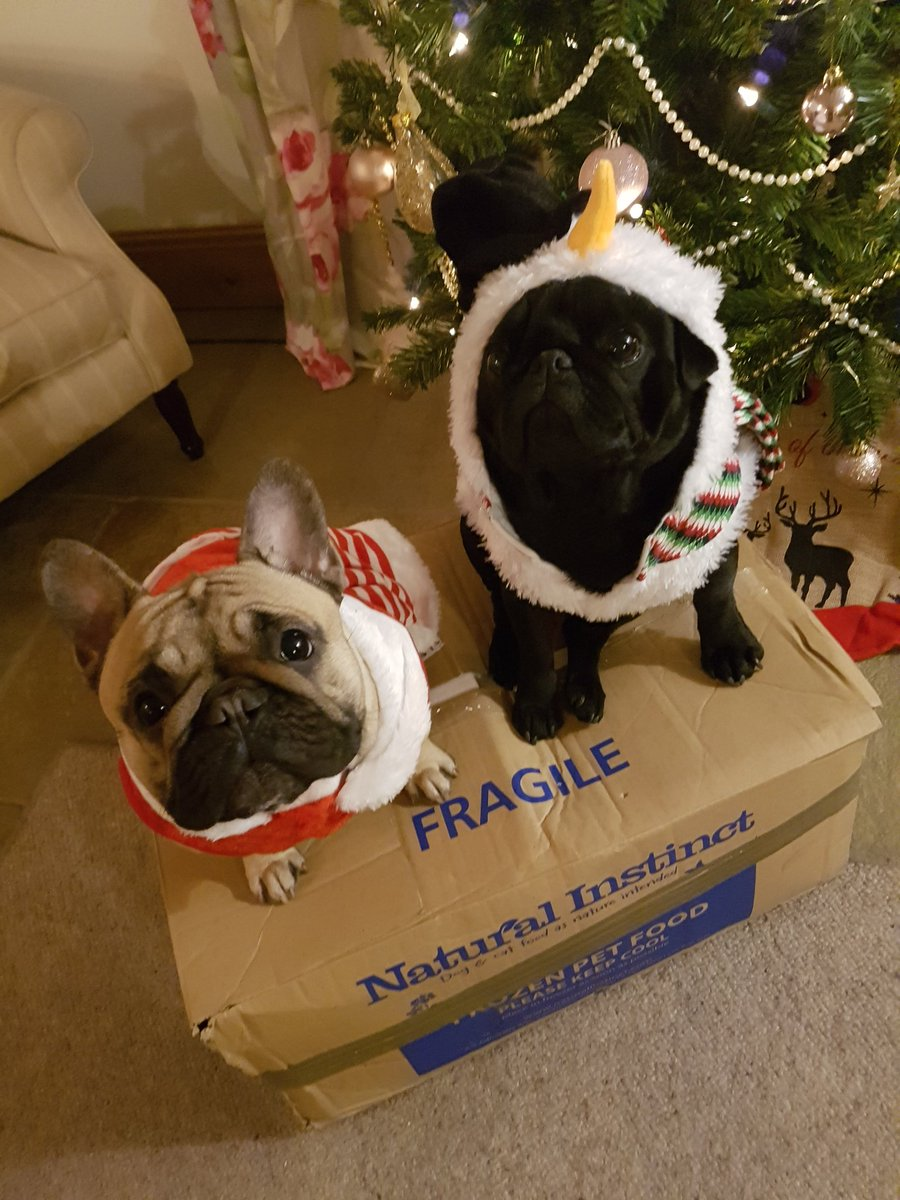Burt and Esme getting ready for Christmas