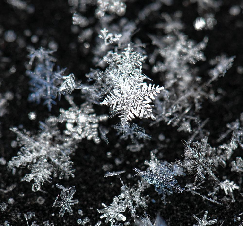 Snowflakes Posing web.jpg