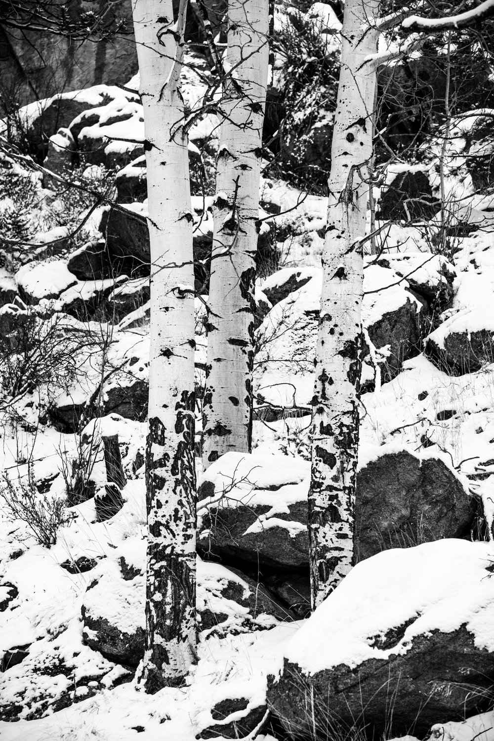 Three Aspens II BW ssm.jpg