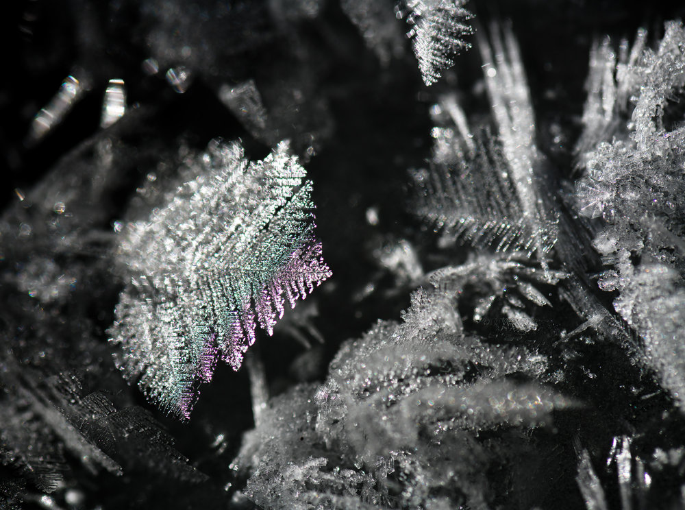 Ice Ferns Dec 29 II  web.jpg