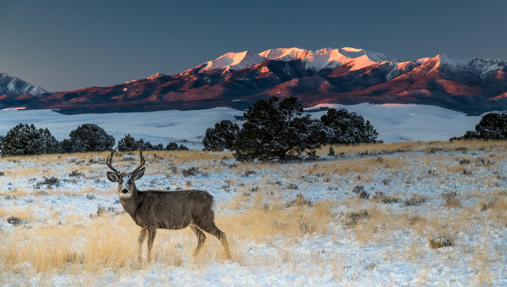 Buck, Meadow, Snow, Sunrise and Mount Herard I web.jpg