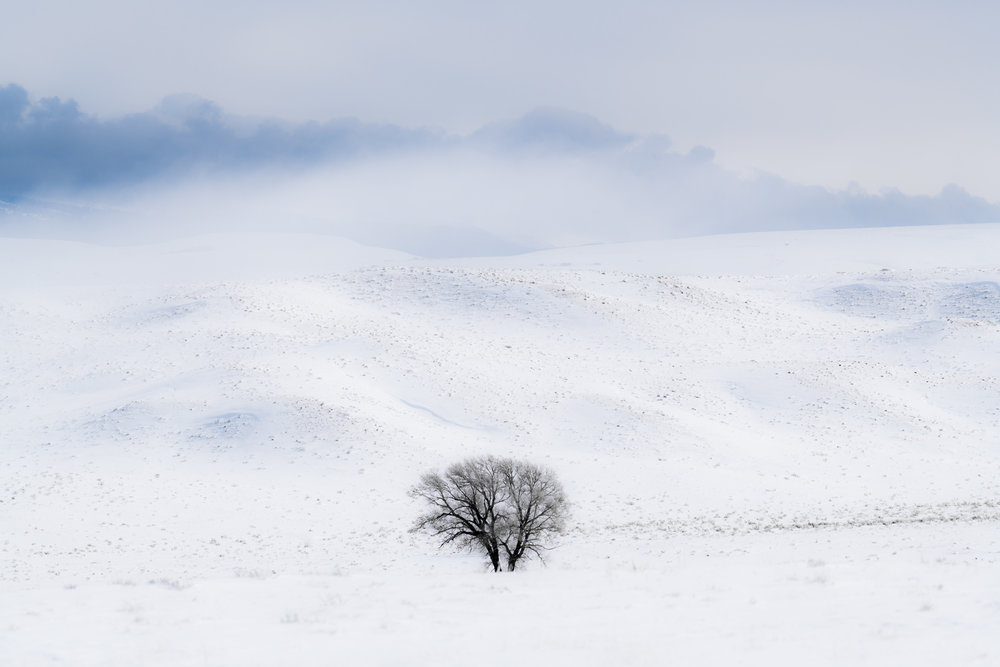 Single Tree in Snowy Hills