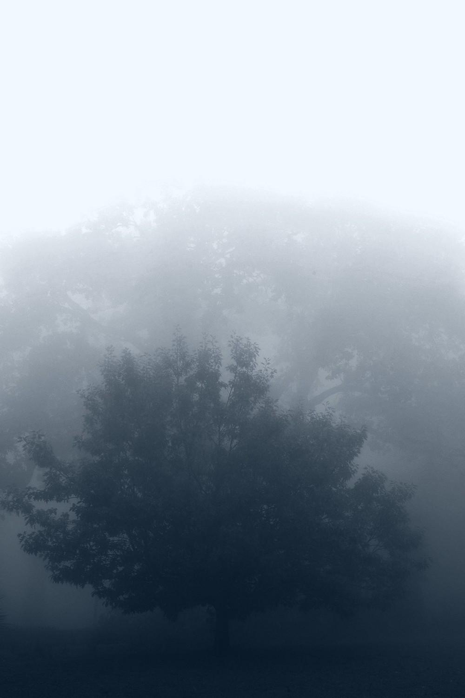 mist009.jpg