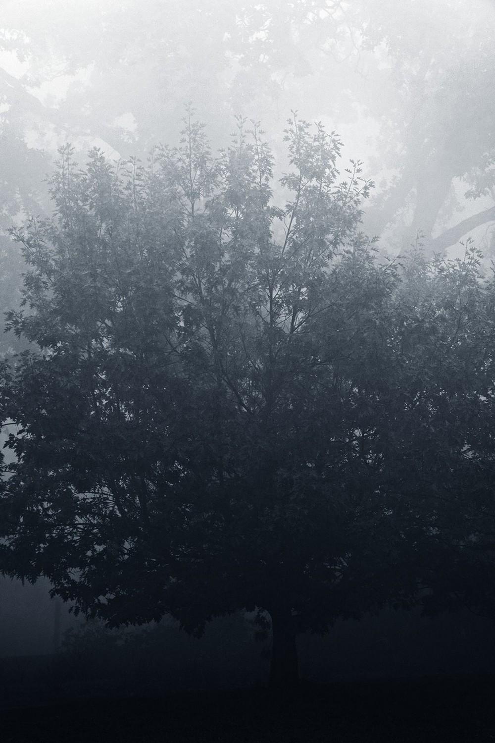 mist010.jpg