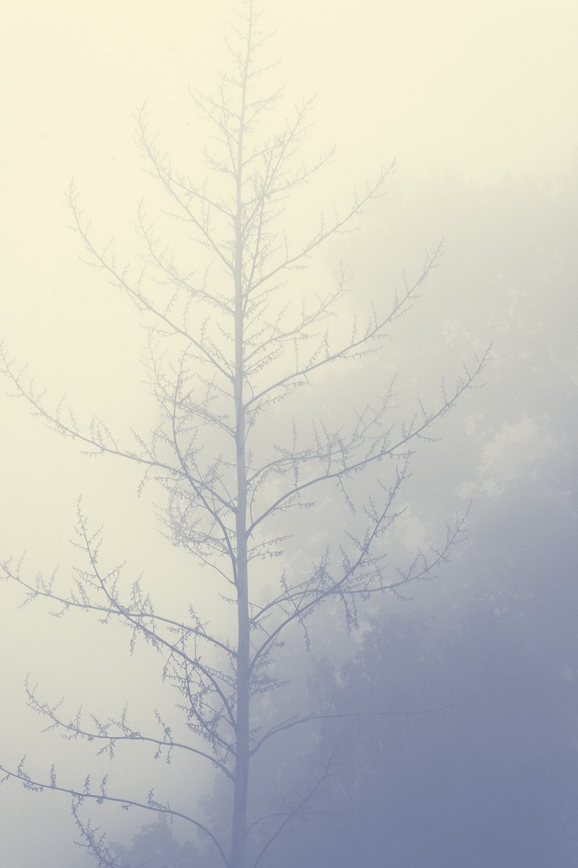 mist012.jpg