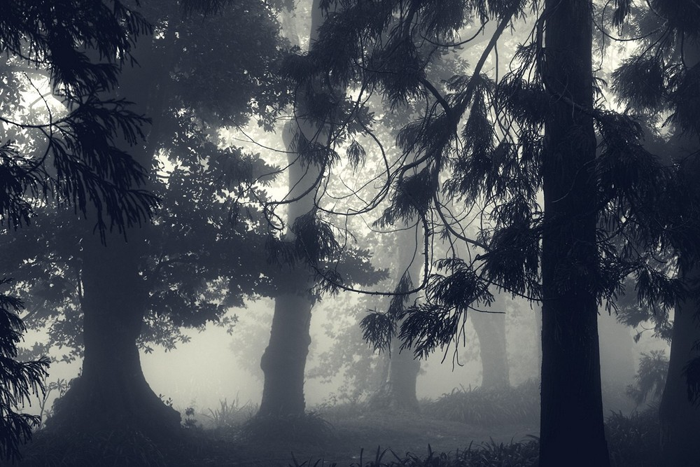 mist015.jpg