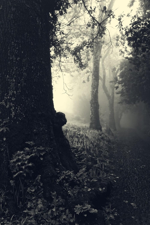 mist018.jpg