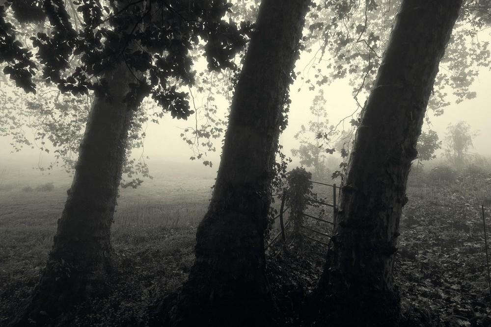 mist019.jpg