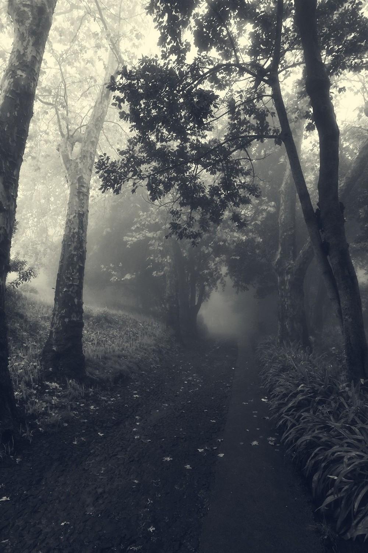 mist017.jpg