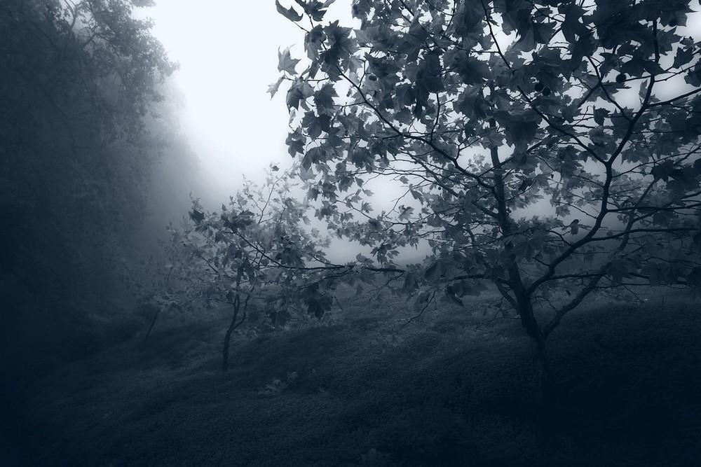 mist020.jpg