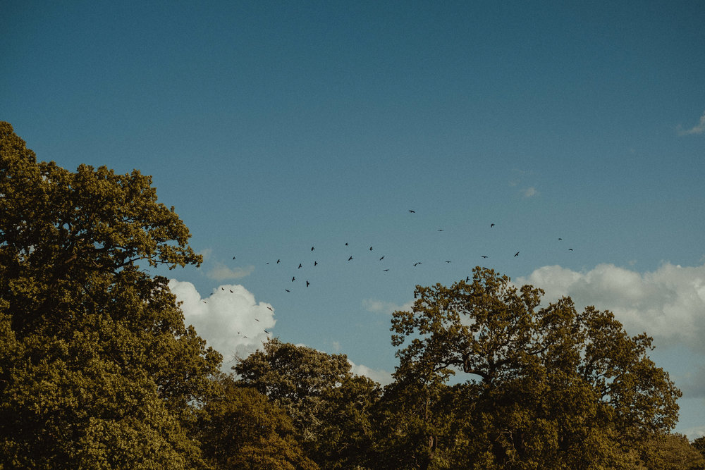 foxandowl.uk_0305.jpg