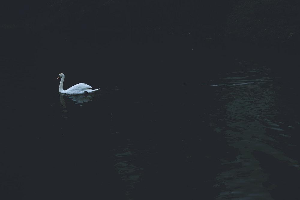 Swan (2016)