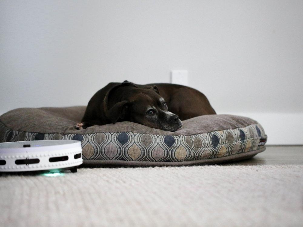 bObi Classic vacuum good with dogs