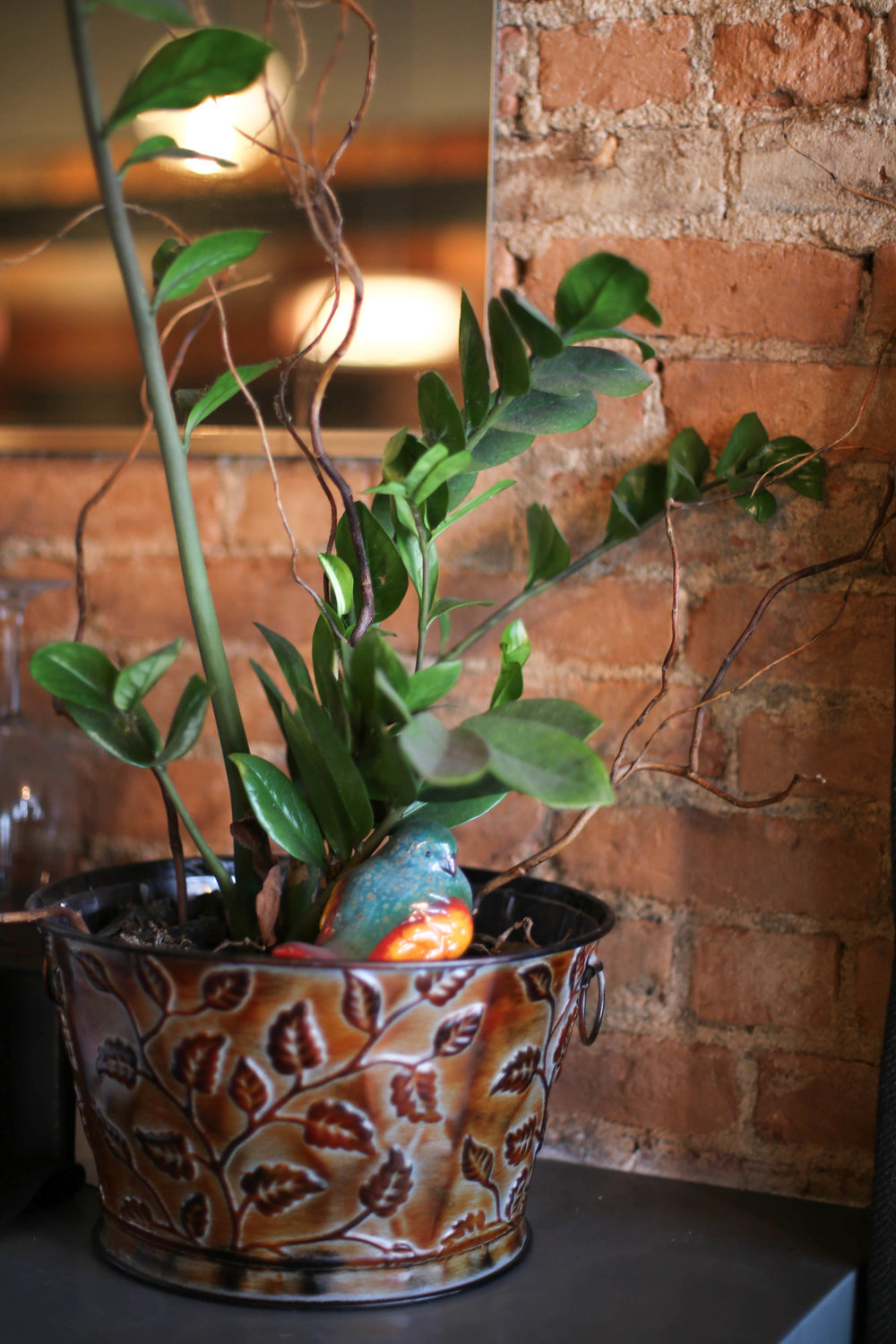 lucy & the wolf, northville michigan, eat local, tapas style, plants,