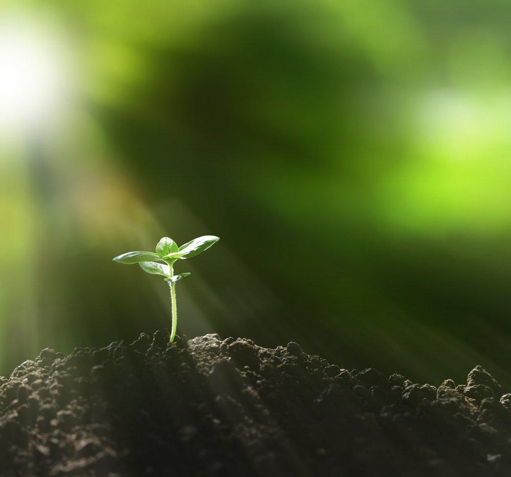 seedling_istock.jpg
