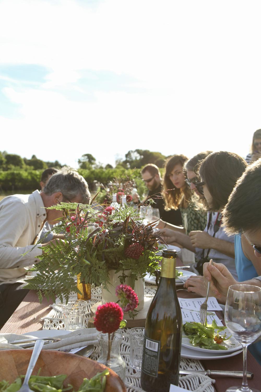 vineyard31.jpg