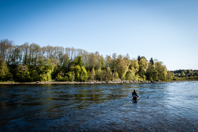 Sportfiske och sportfisketurism gynnas av starka bestånd.