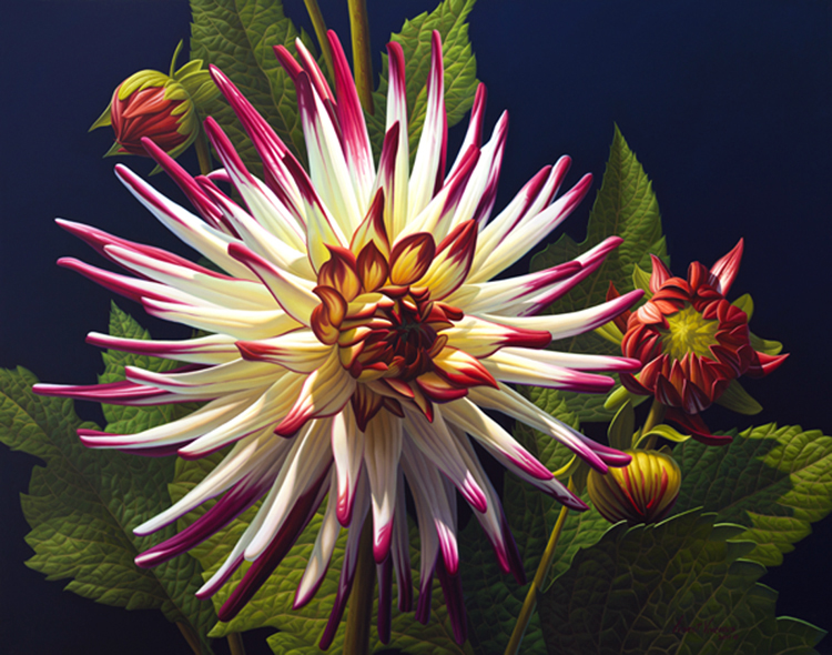 Dahlias in Light