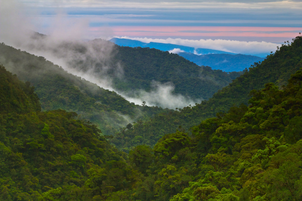 17. The Cloud Forest22.jpg