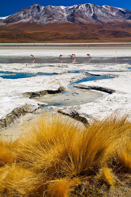 Spotting the Flamingos (tilted)22.jpg