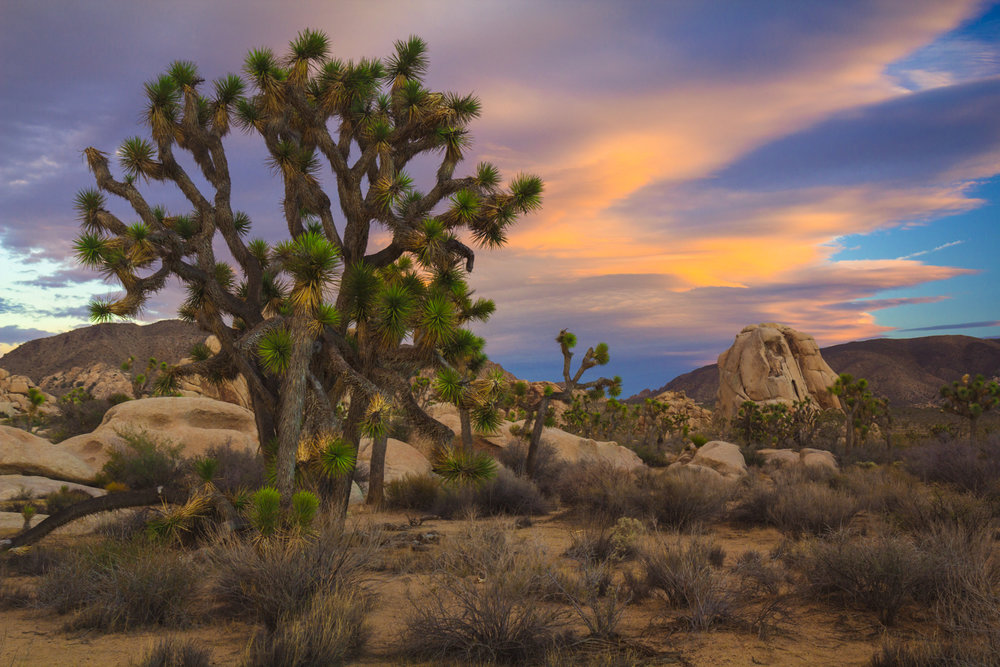 Prehistoric Joshua Tree (PS)2.jpg