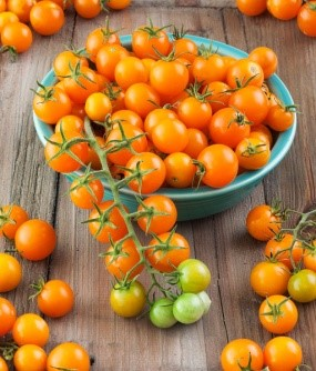 Sungold - The sweetest cherry tomato ever! Very prolific
