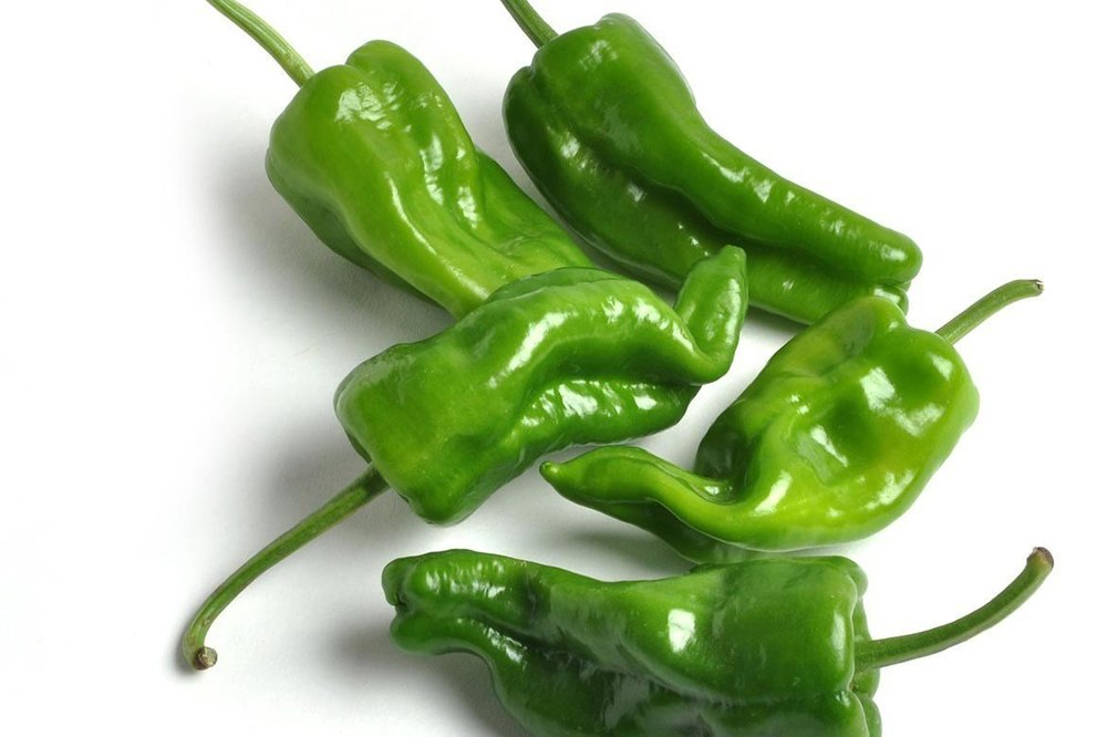 Padron - some are hot and some are not! Spanish tapas pepper, perfect for frying