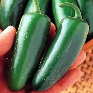 Jalapeno - Nice Spice!