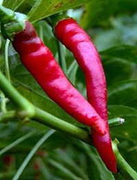 Cayenne - Hot! Use fresh or dried