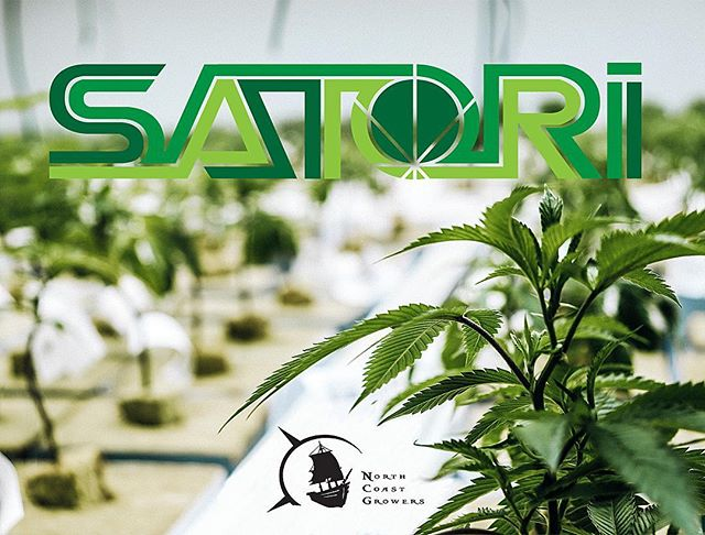 Fresh deliveries of North Coast Growers' craft cannabis have hit the shelves @satori.north & @satori.pullman !!! Consume Responsibly!