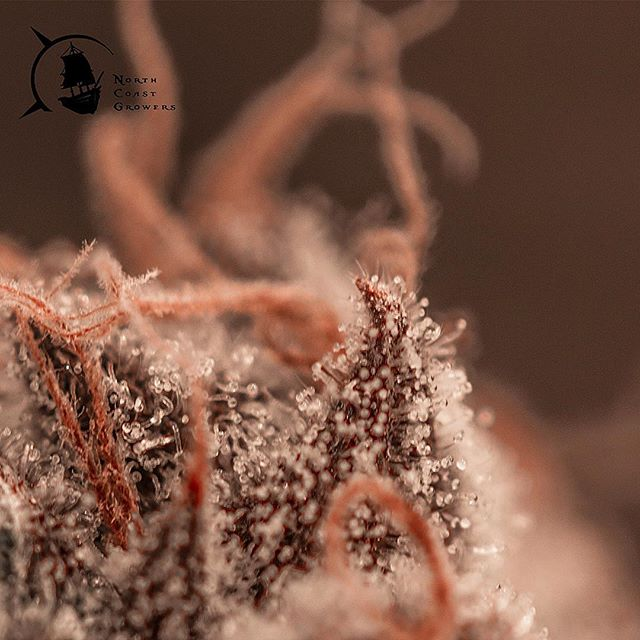 Visit your local retail store and take a look at our tastebud tickling trichomes. Consume Responsibly!
