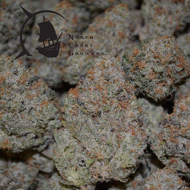 Terpy Fat Tuesday to each of you!! @northcoast_growers has another batch of this delectable WIFI OG, on shelves soon.