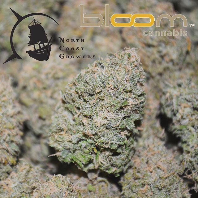 Hoist the sails and head for Bloom Cannabis!! We just caught wind of the amazing deals they are running this week, 15% off North Coast Growers products. @bloom_everett @bloomtacoma