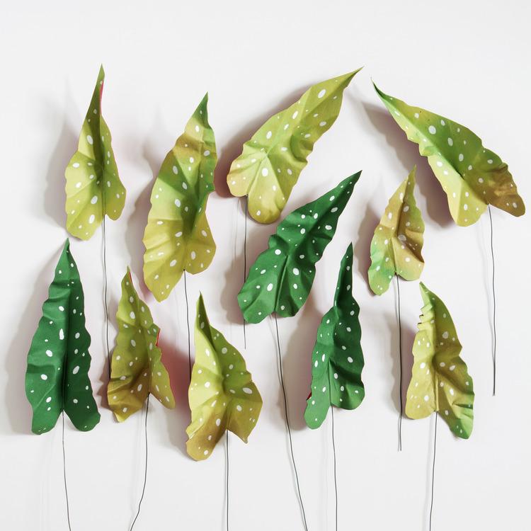 corrie_beth_hogg_paper_plants_begonia_leaves2.jpg