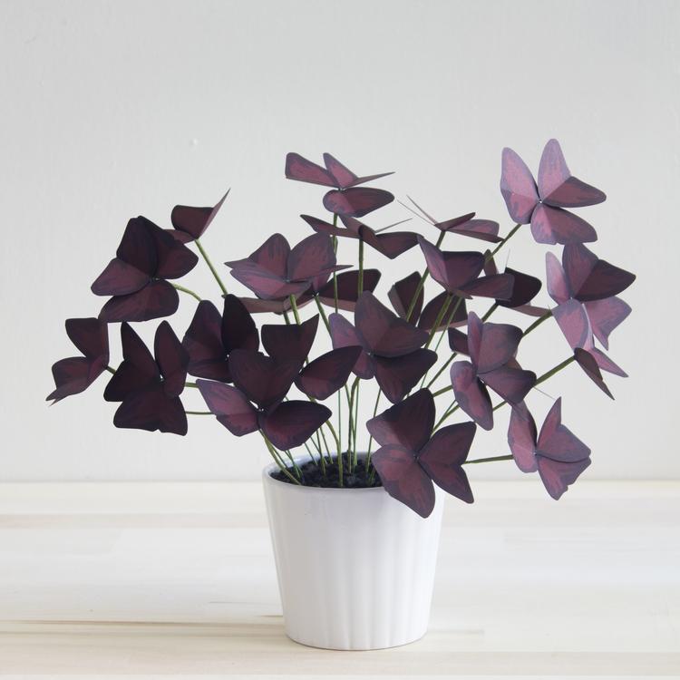 Corrie_Beth_Hogg_paper_plant_oxalis.jpg