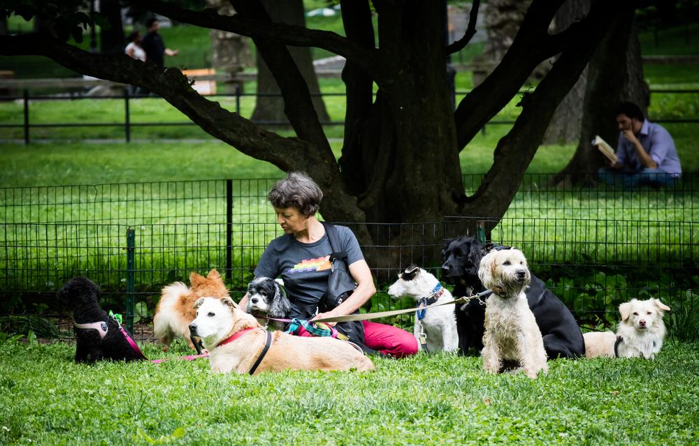 doglady-1.jpg