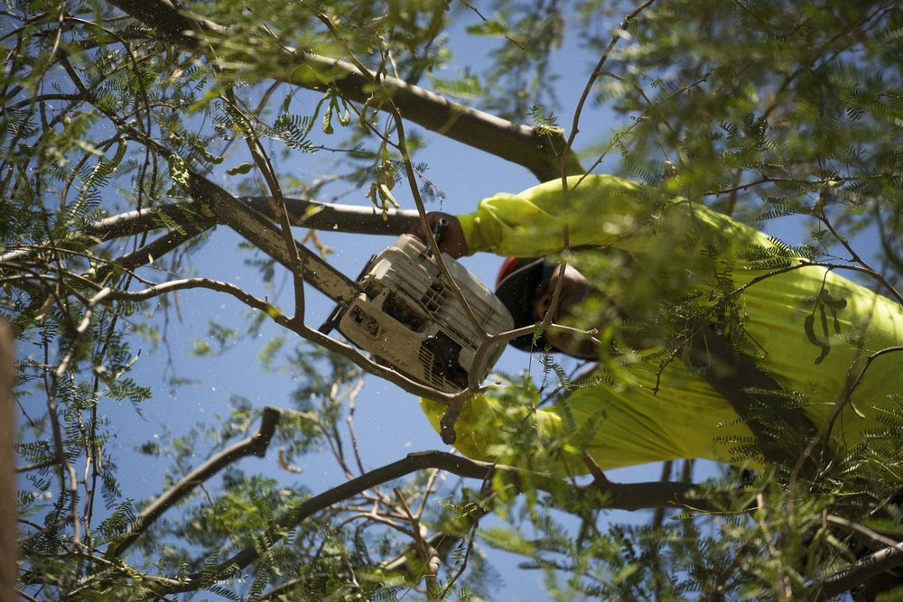tree-care-5.JPG