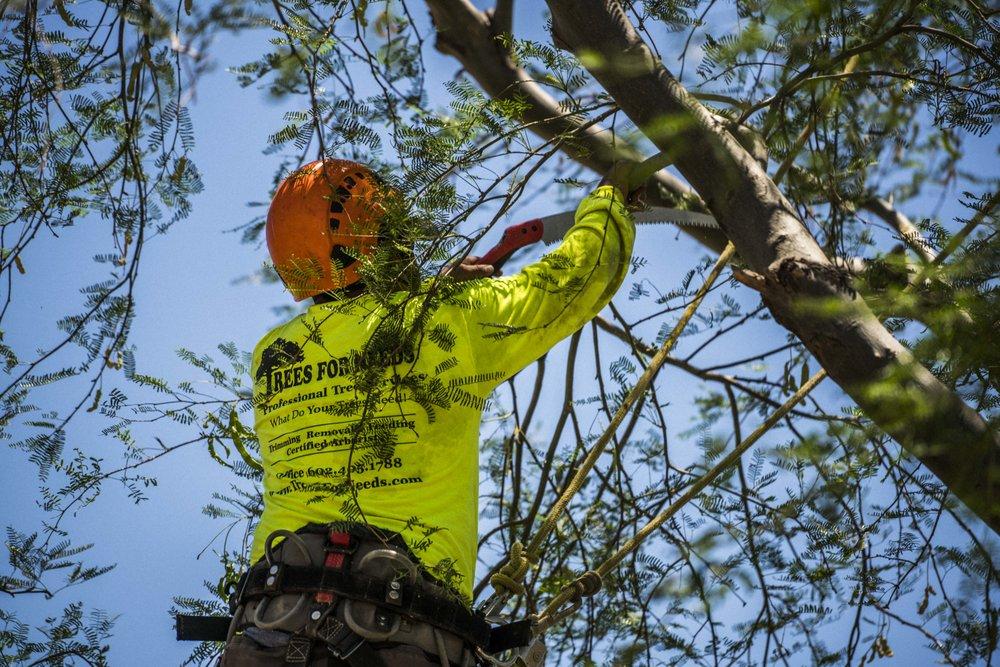 tree-care-6.JPG