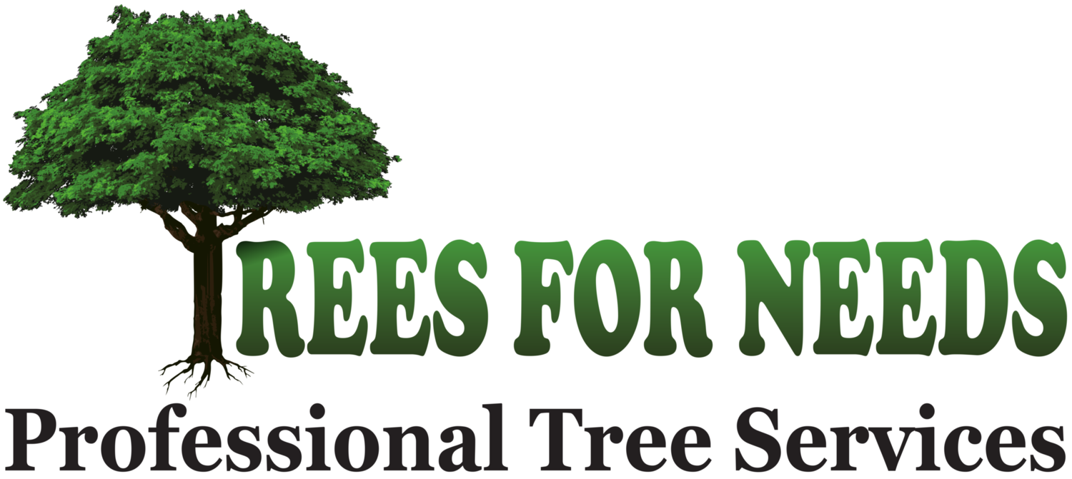 Trees For Needs: Arborist Phoenix | Tree Care Services | Tree Trimming