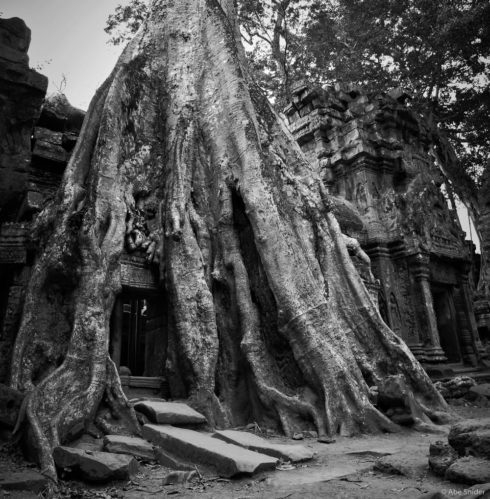 Tree over Ta Prohm - Angkor Wat, Cambodia