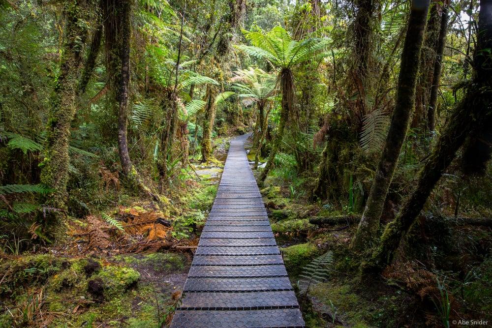 Rainforest, Lake Matheson, New Zealand