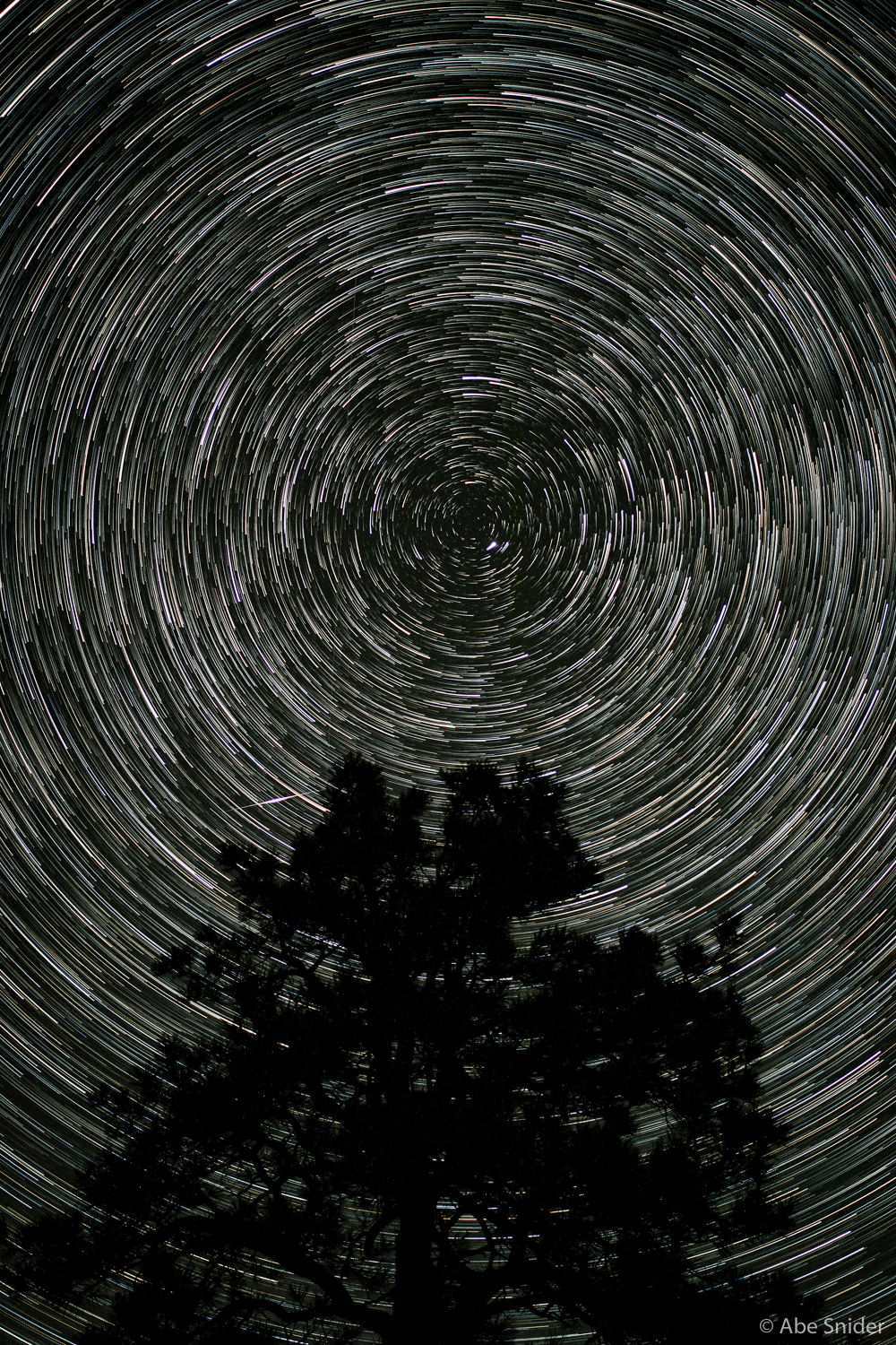 Star Trails over Ponderosa Pine
