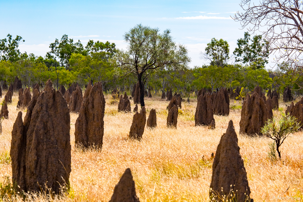 The endless termite mounds of the Outback.