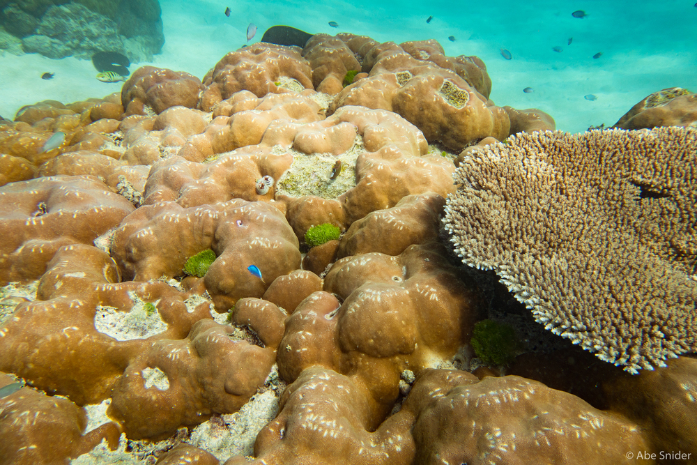 Awesome coral everywhere.